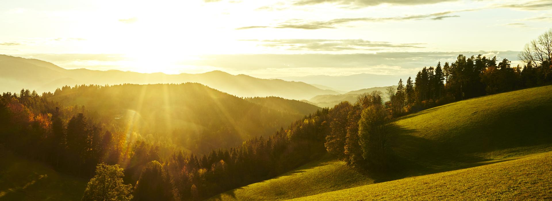 Beim achtsamen Wandern praktizieren wir gemeinsam achtsames Gehen, in Stille und im Austausch.